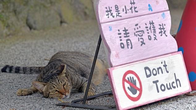 Nơi loài mèo được cưng chiều nhất thế giới - Ảnh 3.