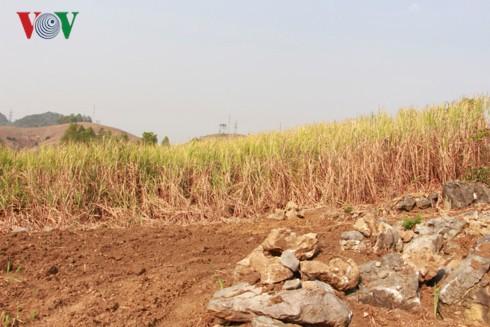 Sơn La nắng nóng kỷ lục, cuộc sống của người dân bị đảo lộn - Ảnh 10.