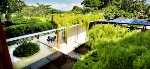 Ngôi nhà xanh mướt với vườn trên mái - Ảnh 7.