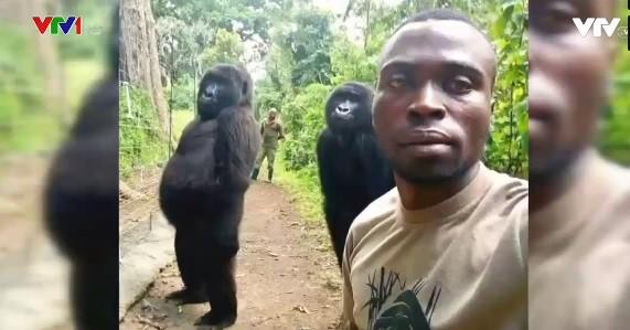 Khỉ đột selfie như người gây bão mạng xã hội - Ảnh 1.