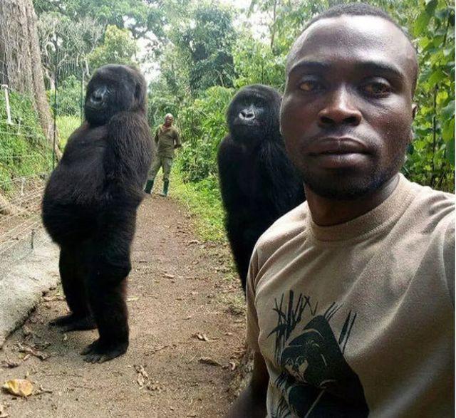 """Chàng kiểm lâm gây """"sốt"""" cộng đồng mạng khi selfie với…. khỉ đột - Ảnh 1."""