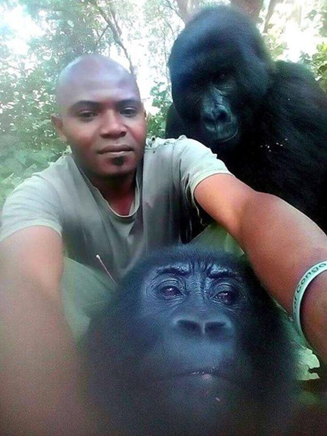 """Chàng kiểm lâm gây """"sốt"""" cộng đồng mạng khi selfie với…. khỉ đột - Ảnh 7."""
