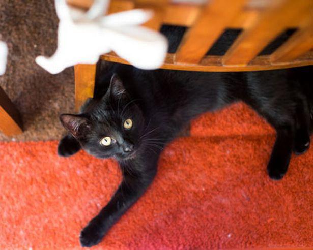 Chú mèo con sống sót thần kỳ bỗng nổi tiếng mạng xã hội - Ảnh 1.