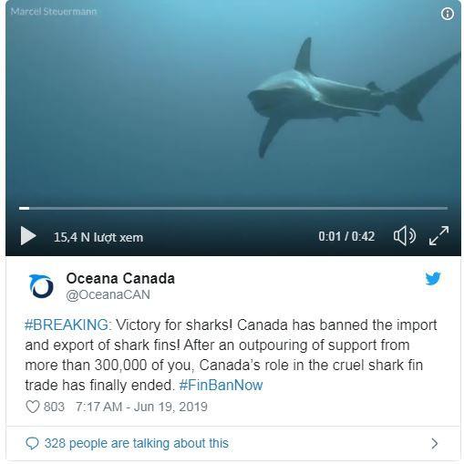 Canada cấm xuất nhập khẩu vây cá mập - Ảnh 1.