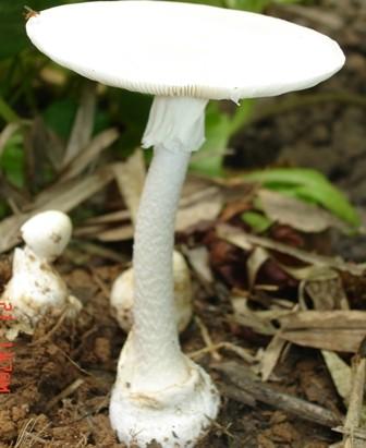 Sơn La: Ngộ độc nấm, 1 người tử vong - Ảnh 3.