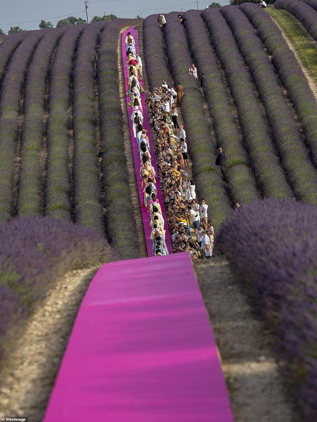 Xao xuyến trước sàn catwalk nằm giữa cánh đồng hoa oải hương - Ảnh 4.