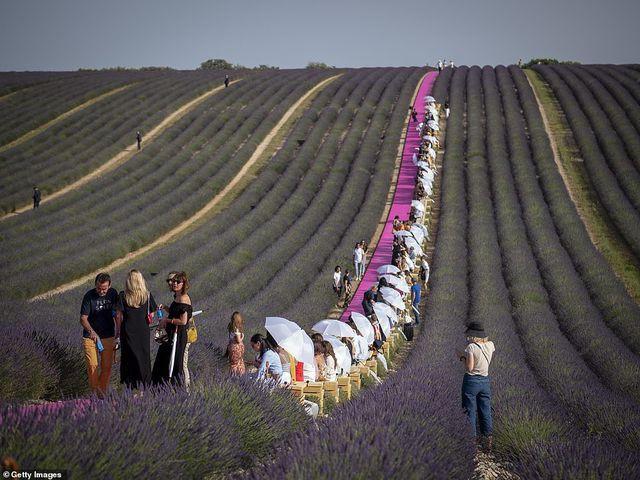 Xao xuyến trước sàn catwalk nằm giữa cánh đồng hoa oải hương - Ảnh 8.