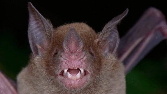 """Sinh vật đã tuyệt chủng bất ngờ xuất hiện ở """"thành phố của Thần Khỉ"""" tại Honduras - Ảnh 8."""