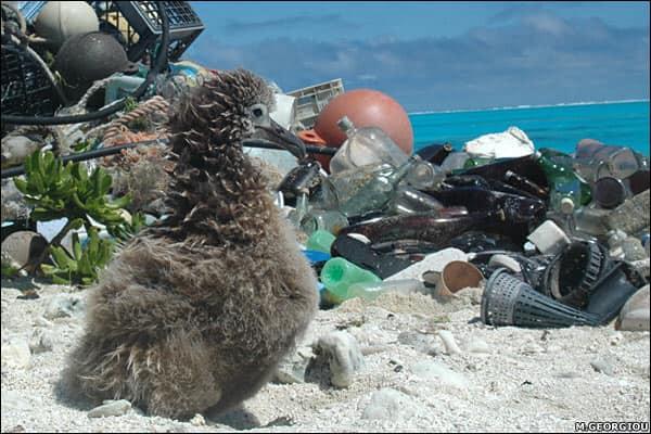 Cất cánh tháng 7: Chúng ta không được để chết trong rác nhựa - Ảnh 2.