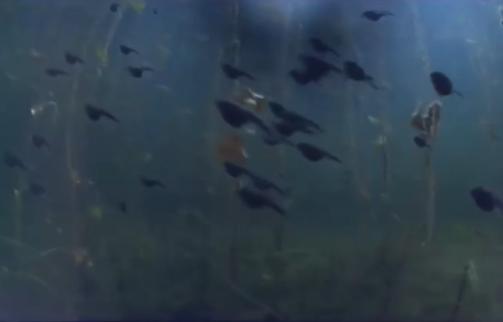 Thợ lặn bơi giữa hàng trăm con nòng nọc - Ảnh 2.