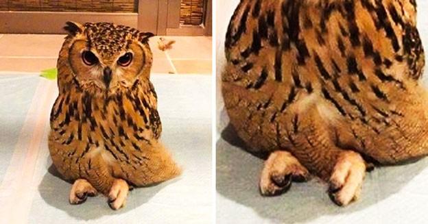 """Chiêm ngưỡng khoảnh khắc động vật bày tỏ tình cảm """"siêu đáng yêu"""" - Ảnh 5."""