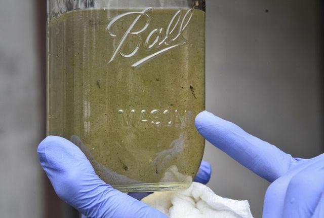 Vi nhựa trong nước uống có gây nguy cơ cho sức khỏe không? - Ảnh 1.