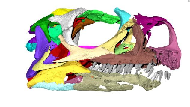 Phát hiện loài khủng long mới sau vài thập kỉ nằm dài trong bảo tàng - ảnh 1