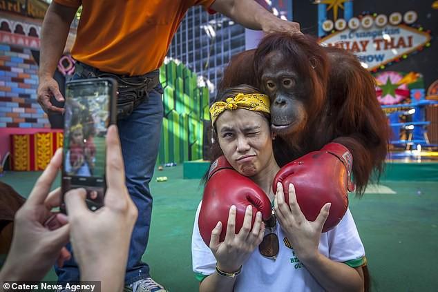 Đau lòng hình ảnh động vật bị xích, sống để mua vui cho con người - Ảnh 4.