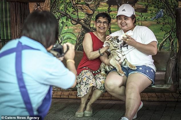 Đau lòng hình ảnh động vật bị xích, sống để mua vui cho con người - Ảnh 5.