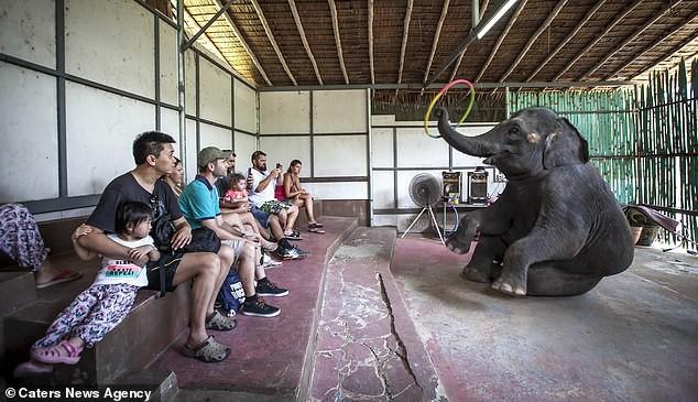 Đau lòng hình ảnh động vật bị xích, sống để mua vui cho con người - Ảnh 10.