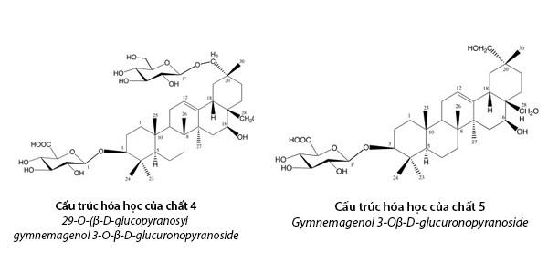Công bố 2 hoạt chất mới giúp hạ đường huyết mạnh trong dây thìa canh Việt Nam - Ảnh 2.