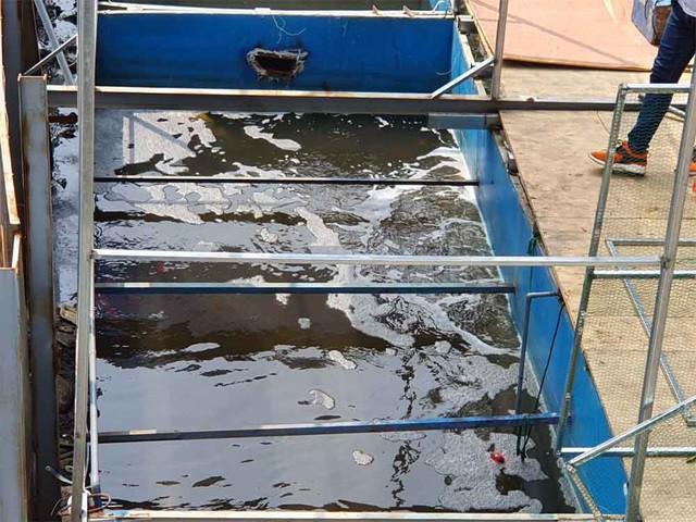 Lắp camera, bố trí người bảo vệ đàn cá koi Nhật Bản ở sông Tô Lịch - Ảnh 6.