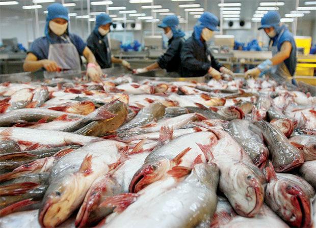 Trung Quốc tăng cường kiểm tra thuỷ sản đông lạnh nhập khẩu - Ảnh 1.