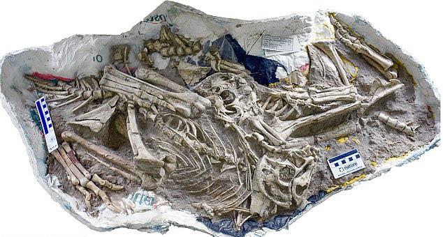 """Phát hiện hóa thạch khủng long """"lai vẹt"""" kỳ lạ - ảnh 2"""
