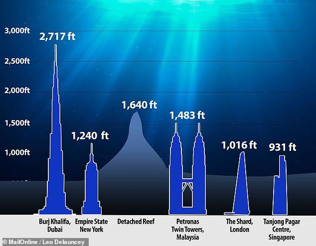 Phát hiện rặng san hô khổng lồ cao đến 500m tại Australia - Ảnh 2.