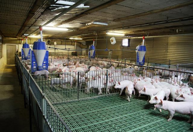 Đối xử nhân đạo với vật nuôi, ngành chăn nuôi phấn đấu vào nhóm tiên tiến vào năm 2030 - Ảnh 1.