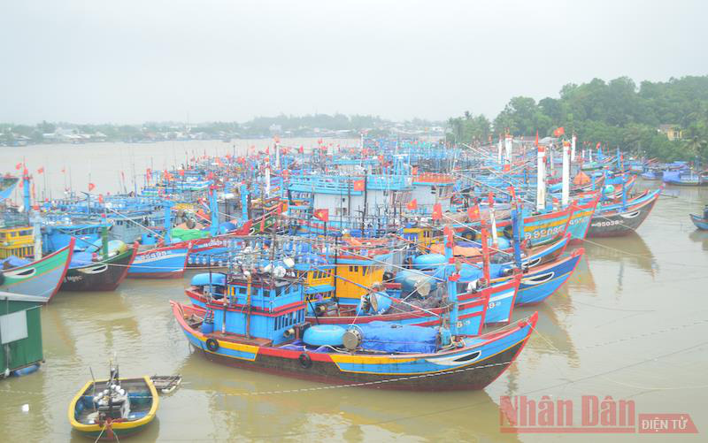 Fishing boats brought to safe anchor in Quang Ngai Province to protect them against Storm Vamco. (Photo: NDO)