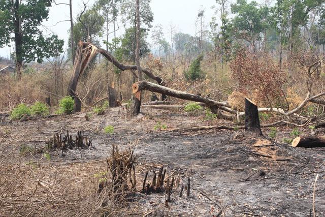 Hàng loạt dự án xin xén rừng tự nhiên - Ảnh 1.