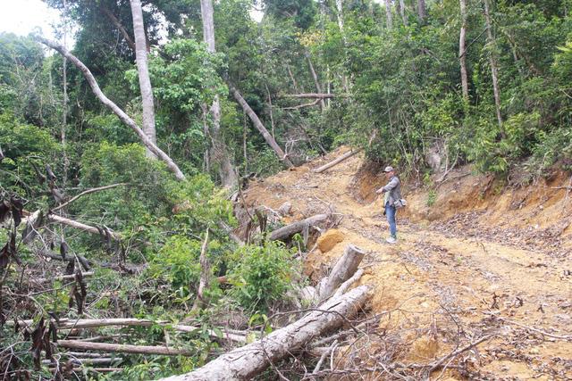 Hàng loạt dự án xin xén rừng tự nhiên - Ảnh 2.