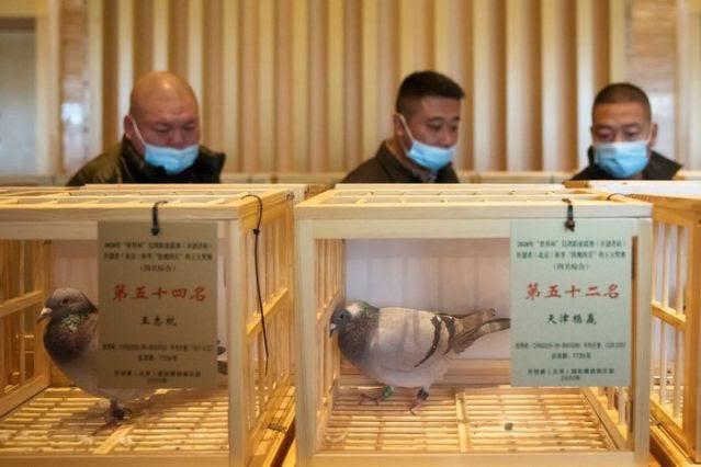 Ấn tượng, môn thể thao đua bồ câu đầy kịch tính tại Trung Quốc - ảnh 2
