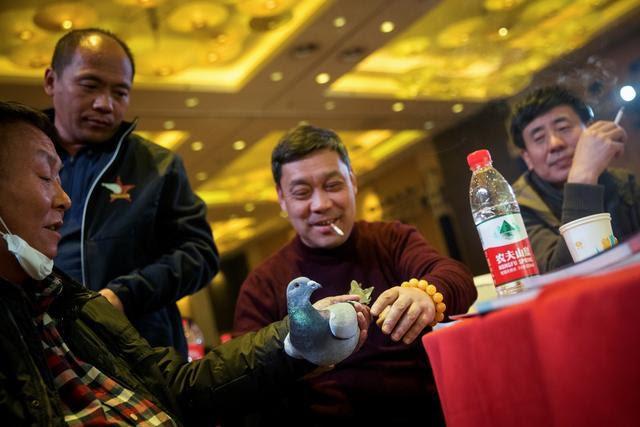 Ấn tượng, môn thể thao đua bồ câu đầy kịch tính tại Trung Quốc - ảnh 3