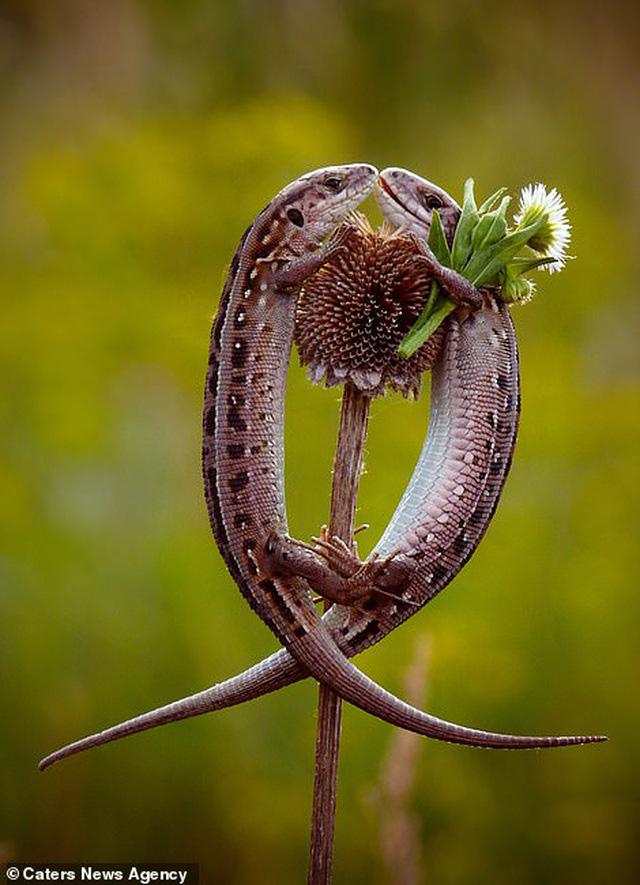 Mỉm cười trước những khoảnh khắc âu yếm trong thế giới động vật - Ảnh 3.