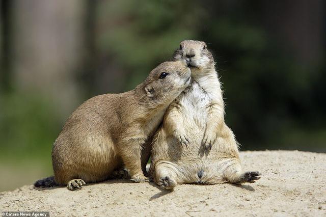 Mỉm cười trước những khoảnh khắc âu yếm trong thế giới động vật - Ảnh 7.