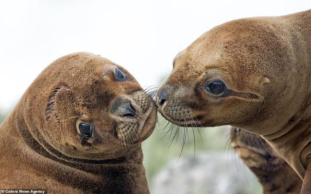 Mỉm cười trước những khoảnh khắc âu yếm trong thế giới động vật - Ảnh 9.