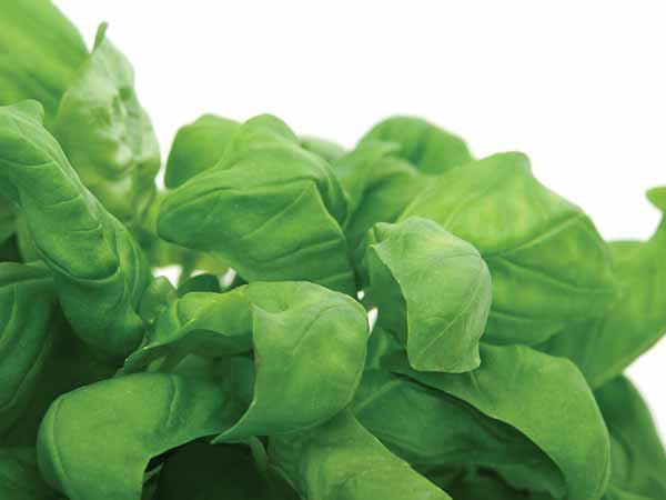 Đánh bay mỡ bụng nhanh chóng với các thực phẩm xanh - Ảnh 6.