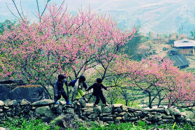 Hoa đào núi Tây Bắc khoe sắc hồng tuyệt đẹp trong nắng xuân - Ảnh 2.