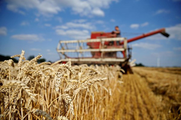 Nga thận trọng trong việc xuất khẩu lúa mỳ - Ảnh 1.