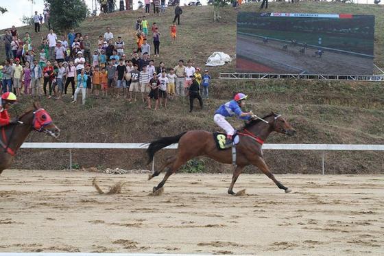 Đề nghị cho phép Trường đua ngựa Thiên Mã được kinh doanh đặt cược - Ảnh 1.