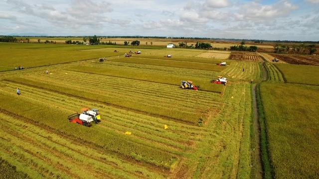 Đề xuất tiếp tục miễn thuế sử dụng đất nông nghiệp đến hết năm 2025 - Ảnh 1.