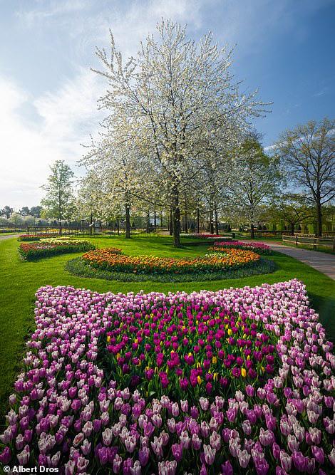 """""""Vườn hoa mùa xuân đẹp nhất thế giới nở rộ nhưng không có khách tham quan - Ảnh 5."""