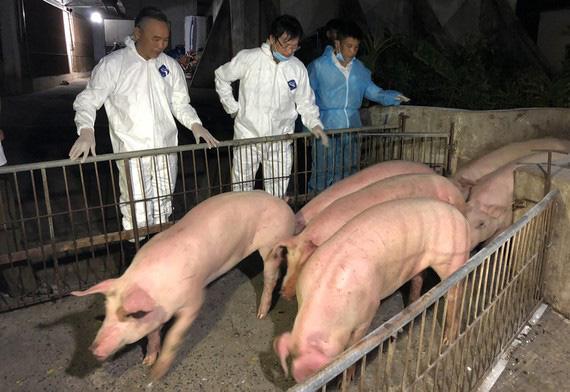 Nhập khẩu lợn sống: Giải pháp hiệu quả giảm nhiệt giá thịt lợn? - Ảnh 1.