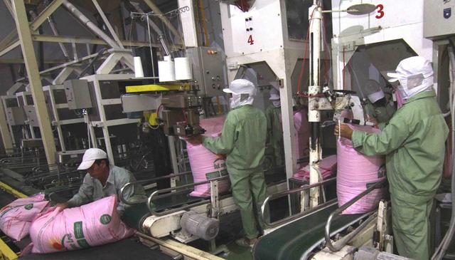 Việt Nam có thể trở thành nước xuất khẩu gạo hàng đầu thế giới - Ảnh 1.