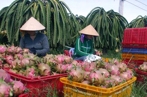 """Rau quả Việt """"tính kế"""" đa dạng hóa thị trường từ EVFTA - Ảnh 2."""