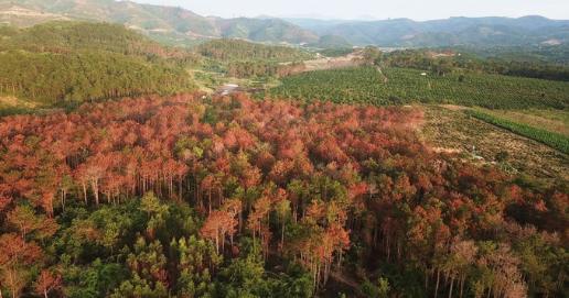 Đầu độc 10 ha rừng thông để chiếm đất, 7 lâm tặc lãnh án tù - Ảnh 3.