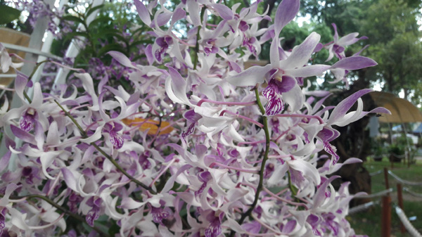 Mê Lan - Thương hiệu uy tín dành cho tín đồ thích trồng hoa lan - Ảnh 3.