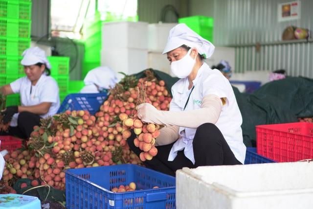 Hàng loạt nông sản Việt Nam sắp lên đường sang EU - Ảnh 1.