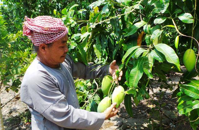 Chống mạo danh vùng trồng để xuất khẩu nông sản - ảnh 1