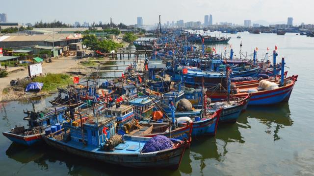 """Gỡ """"thẻ vàng"""" cho thủy sản Việt Nam - Vì sao vẫn khó? - Ảnh 2."""