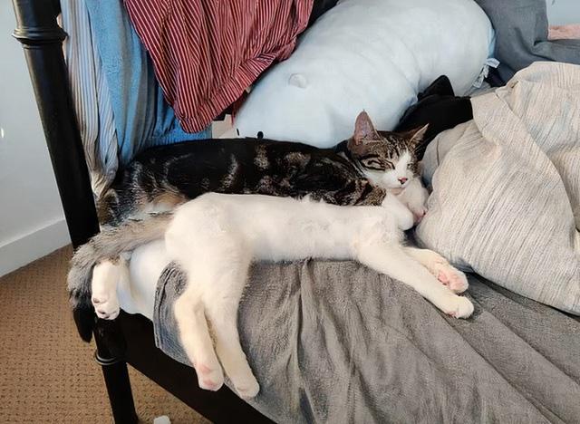 """Mèo trở thành """"ngôi sao mạng xã hội"""" vì loạt ảnh """"tự sướng"""" bằng iPad - Ảnh 3."""