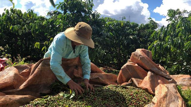 Cà phê Việt Nam đặt mục tiêu xuất khẩu 6 tỷ USD - Ảnh 1.